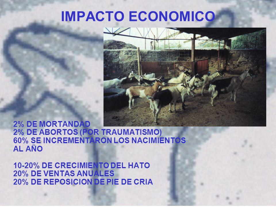 IMPACTO ECONOMICO 2% DE MORTANDAD 2% DE ABORTOS (POR TRAUMATISMO) 60% SE INCREMENTARON LOS NACIMIENTOS AL AÑO 10-20% DE CRECIMIENTO DEL HATO 20% DE VENTAS ANUALES 20% DE REPOSICION DE PIE DE CRIA