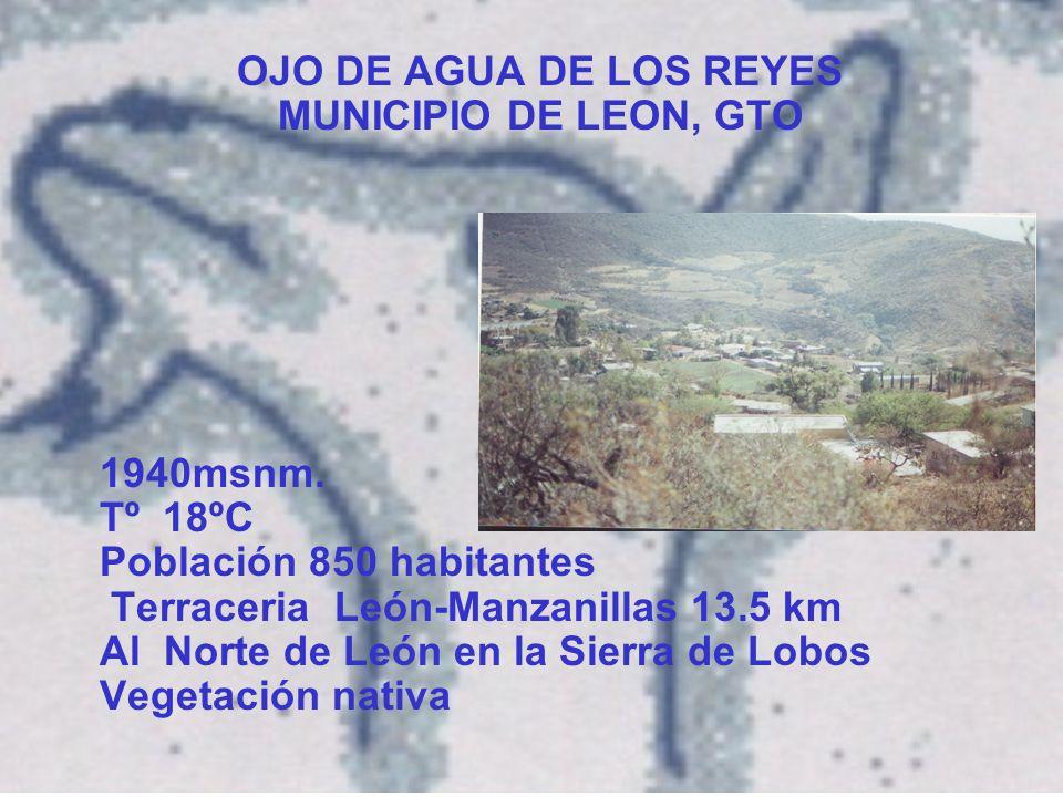 OJO DE AGUA DE LOS REYES MUNICIPIO DE LEON, GTO 1940msnm.