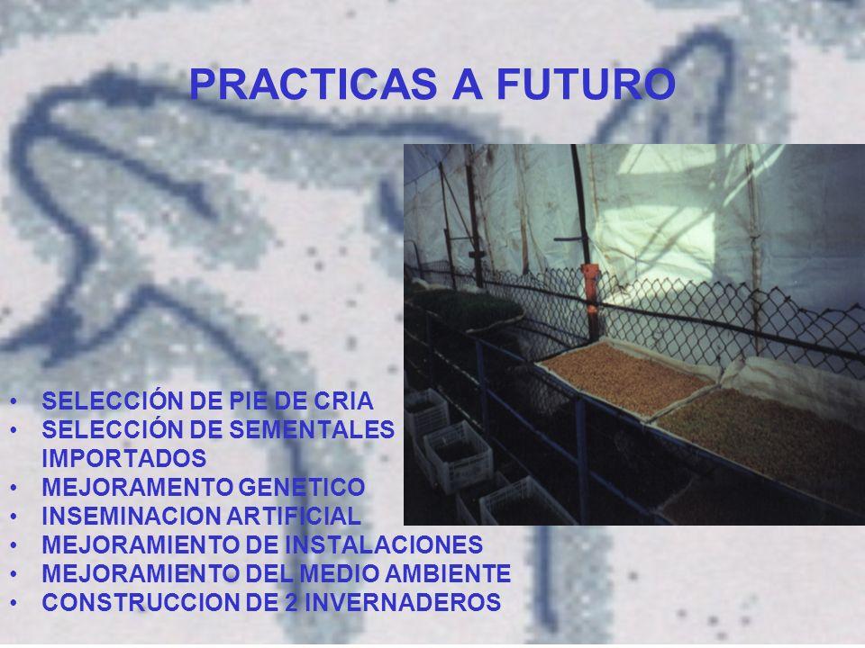 PRACTICAS A FUTURO SELECCIÓN DE PIE DE CRIA SELECCIÓN DE SEMENTALES IMPORTADOS MEJORAMENTO GENETICO INSEMINACION ARTIFICIAL MEJORAMIENTO DE INSTALACIONES MEJORAMIENTO DEL MEDIO AMBIENTE CONSTRUCCION DE 2 INVERNADEROS