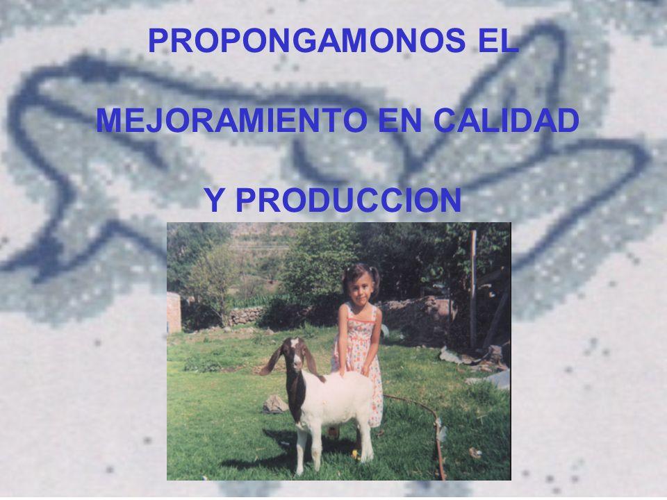 PROPONGAMONOS EL MEJORAMIENTO EN CALIDAD Y PRODUCCION