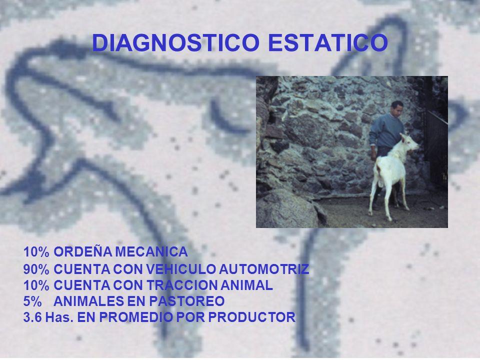 DIAGNOSTICO ESTATICO 10% ORDEÑA MECANICA 90% CUENTA CON VEHICULO AUTOMOTRIZ 10% CUENTA CON TRACCION ANIMAL 5% ANIMALES EN PASTOREO 3.6 Has.