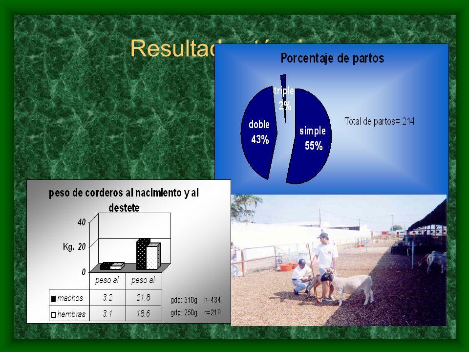 4.- Información económica RANCHO SAN PABLO