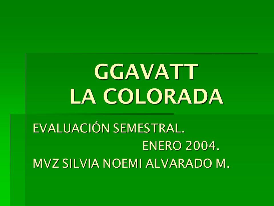 GGAVATT LA COLORADA EVALUACIÓN SEMESTRAL. ENERO 2004. MVZ SILVIA NOEMI ALVARADO M.