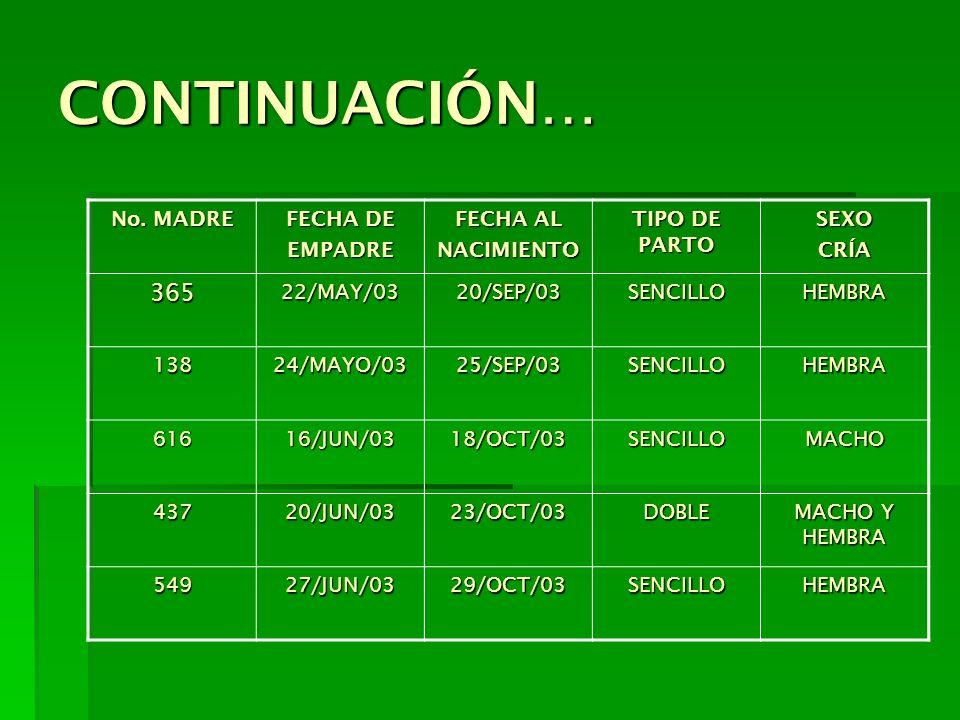 CONTINUACIÓN… No. MADRE FECHA DE EMPADRE FECHA AL NACIMIENTO TIPO DE PARTO SEXOCRÍA 36522/MAY/0320/SEP/03SENCILLOHEMBRA 13824/MAYO/0325/SEP/03SENCILLO