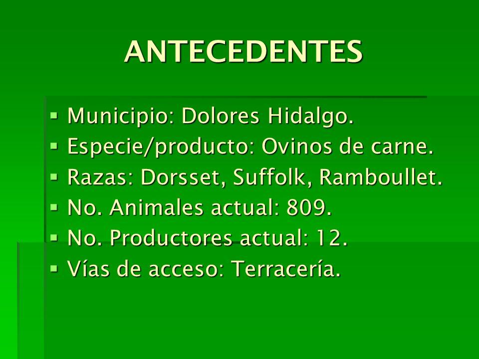 ANTECEDENTES Municipio: Dolores Hidalgo. Municipio: Dolores Hidalgo. Especie/producto: Ovinos de carne. Especie/producto: Ovinos de carne. Razas: Dors