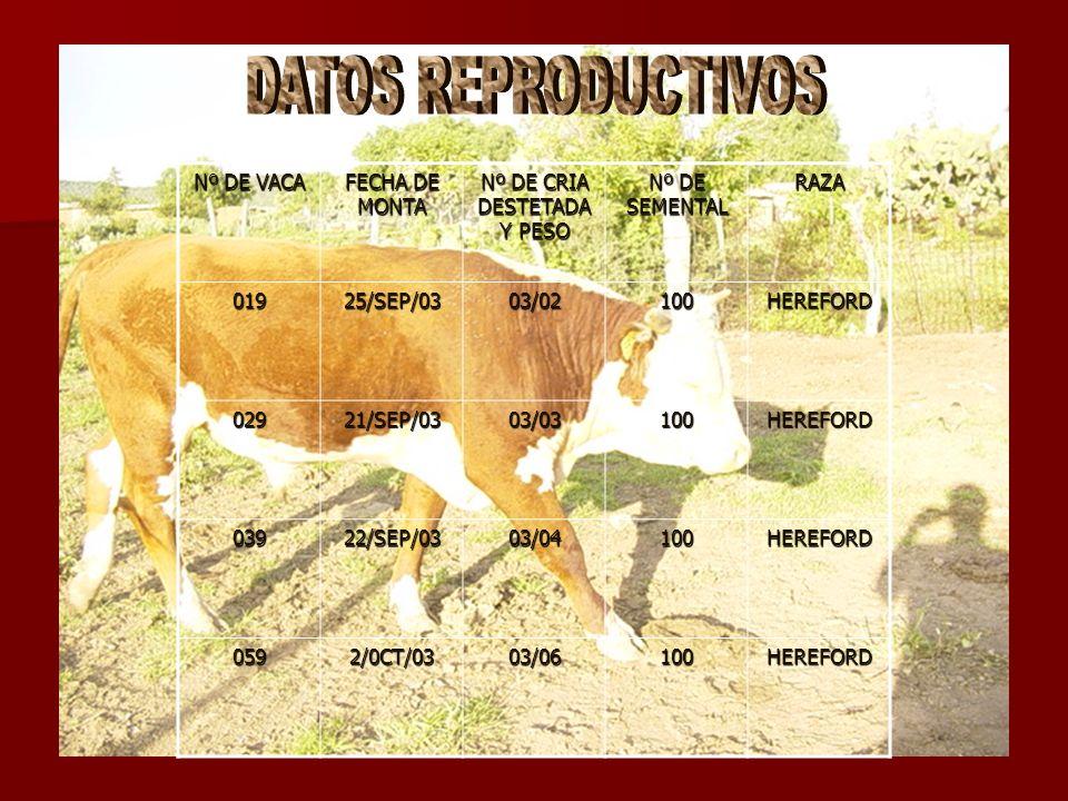 Nº DE VACA FECHA DE MONTA Nº DE CRIA DESTETADA Y PESO Nº DE SEMENTAL RAZA01925/SEP/0303/02100HEREFORD 02921/SEP/0303/03100HEREFORD 03922/SEP/0303/0410