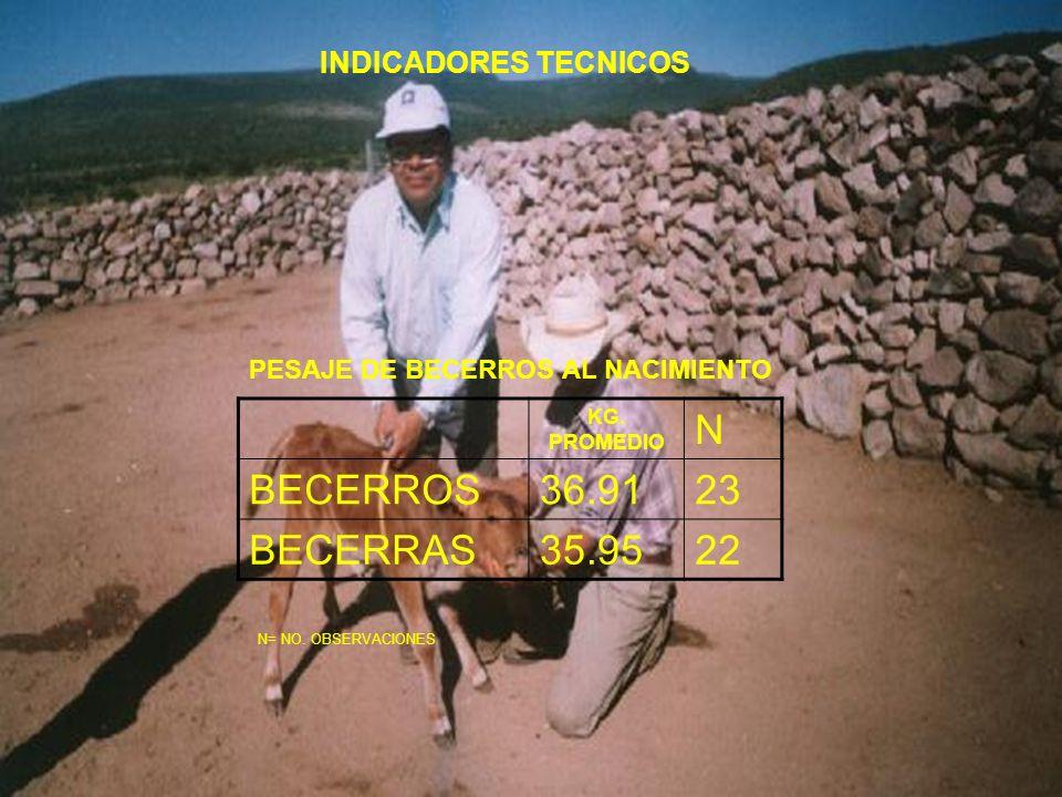 INDICADORES TECNICOS PESAJE DE BECERROS AL NACIMIENTO KG. PROMEDIO N BECERROS36.9123 BECERRAS35.9522 N= NO. OBSERVACIONES