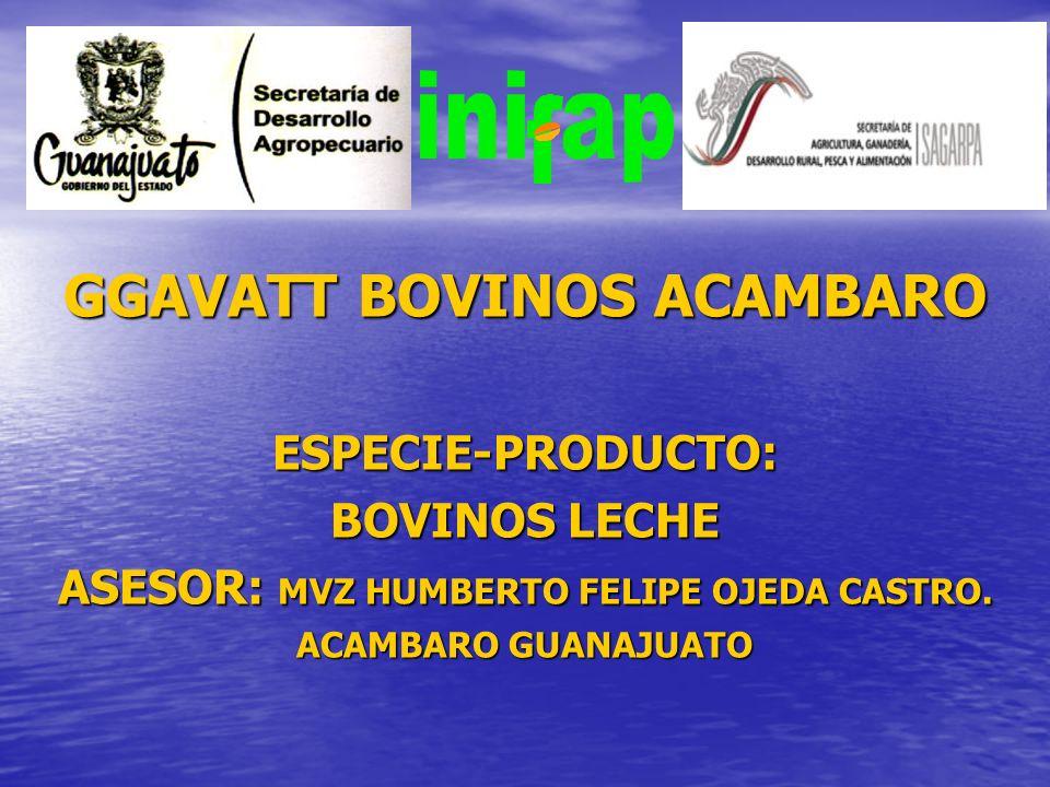 GGAVATT BOVINOS ACAMBARO ESPECIE-PRODUCTO: BOVINOS LECHE ASESOR: MVZ HUMBERTO FELIPE OJEDA CASTRO. ACAMBARO GUANAJUATO