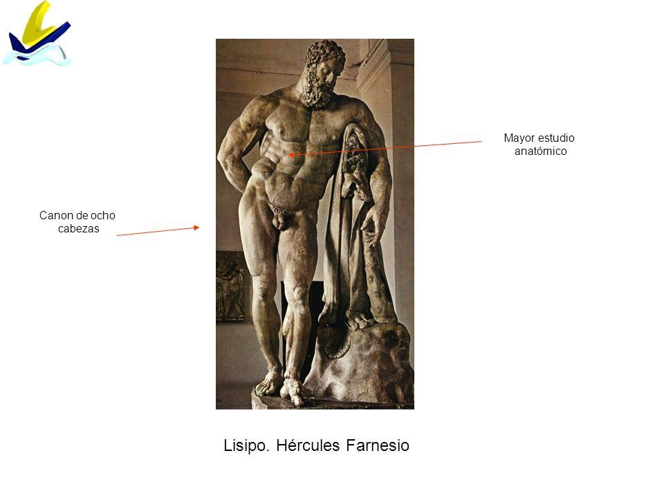 Lisipo. Hércules Farnesio Canon de ocho cabezas Mayor estudio anatómico