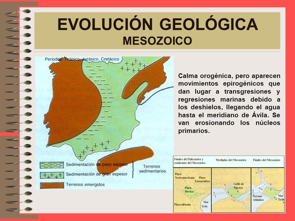 EVOLUCIÓN GEOLÓGICA MESOZOICO Calma orogénica, pero aparecen movimientos epirogénicos que dan lugar a transgresiones y regresiones marinas debido a los deshielos, llegando el agua hasta el meridiano de Ávila.