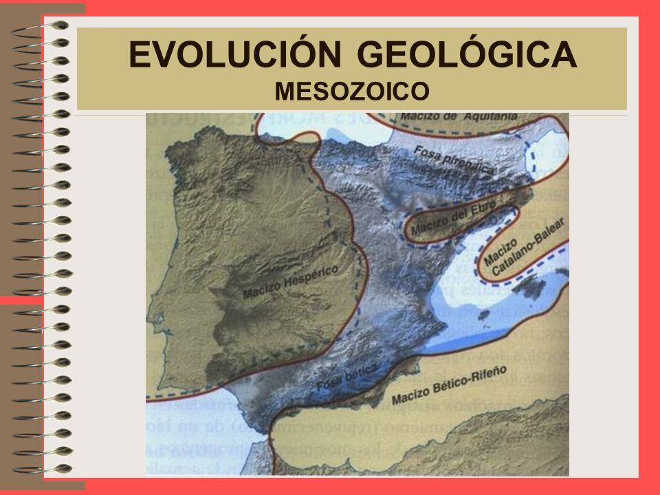 EVOLUCIÓN GEOLÓGICA MESOZOICO Calma orogénica, pero aparecen movimientos epirogénicos que dan lugar a transgresiones y regresiones marinas debido a lo