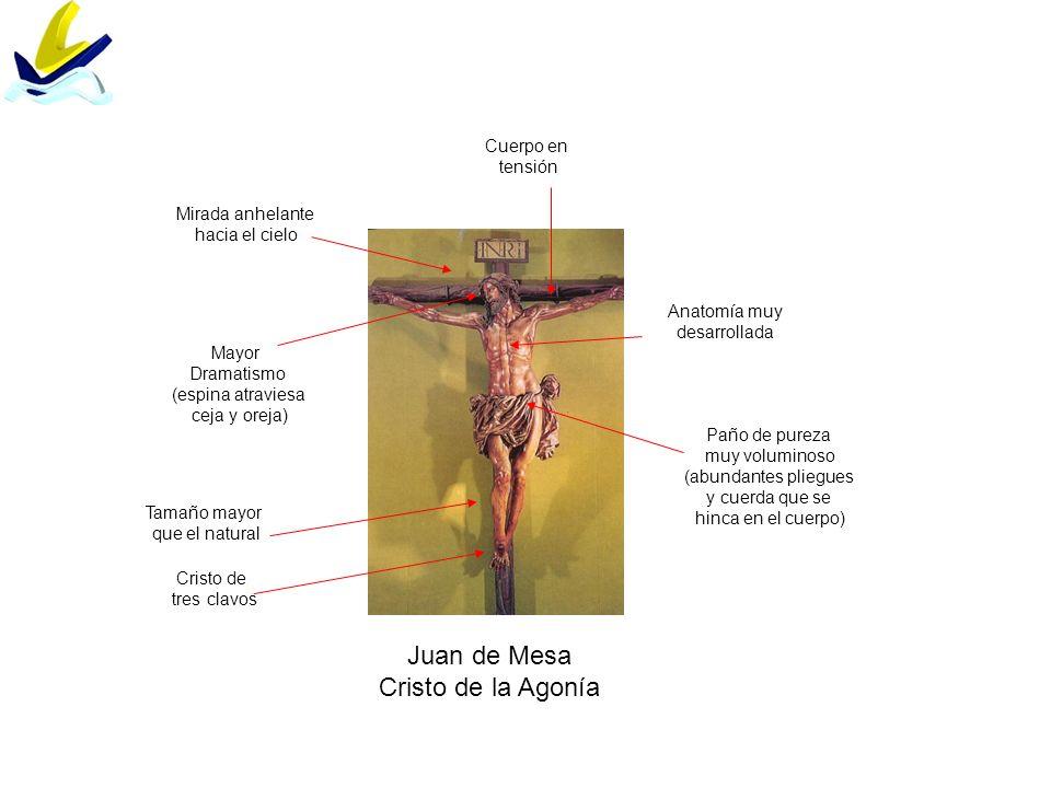 Juan de Mesa Cristo de la Agonía Anatomía muy desarrollada Mayor Dramatismo (espina atraviesa ceja y oreja) Paño de pureza muy voluminoso (abundantes