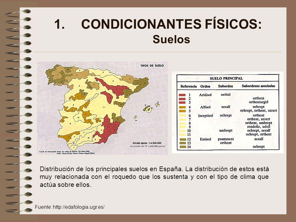 1.CONDICIONANTES FÍSICOS: Suelos Distribución de los principales suelos en España. La distribución de estos está muy relacionada con el roquedo que lo