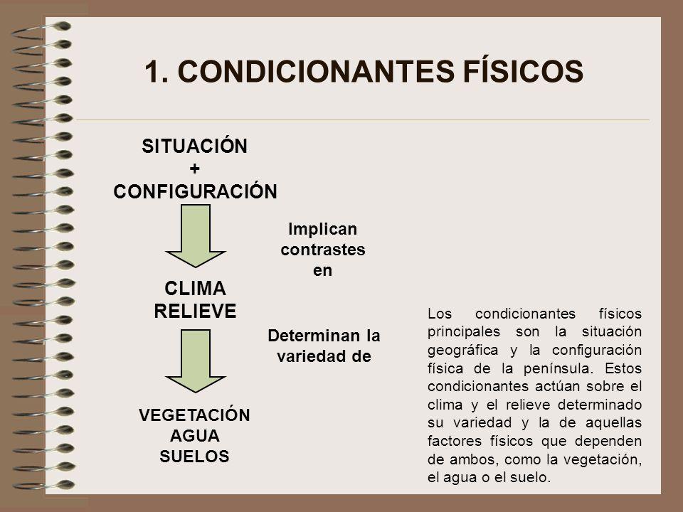 Implican contrastes en Determinan la variedad de SITUACIÓN + CONFIGURACIÓN CLIMA RELIEVE VEGETACIÓN AGUA SUELOS 1. CONDICIONANTES FÍSICOS Los condicio