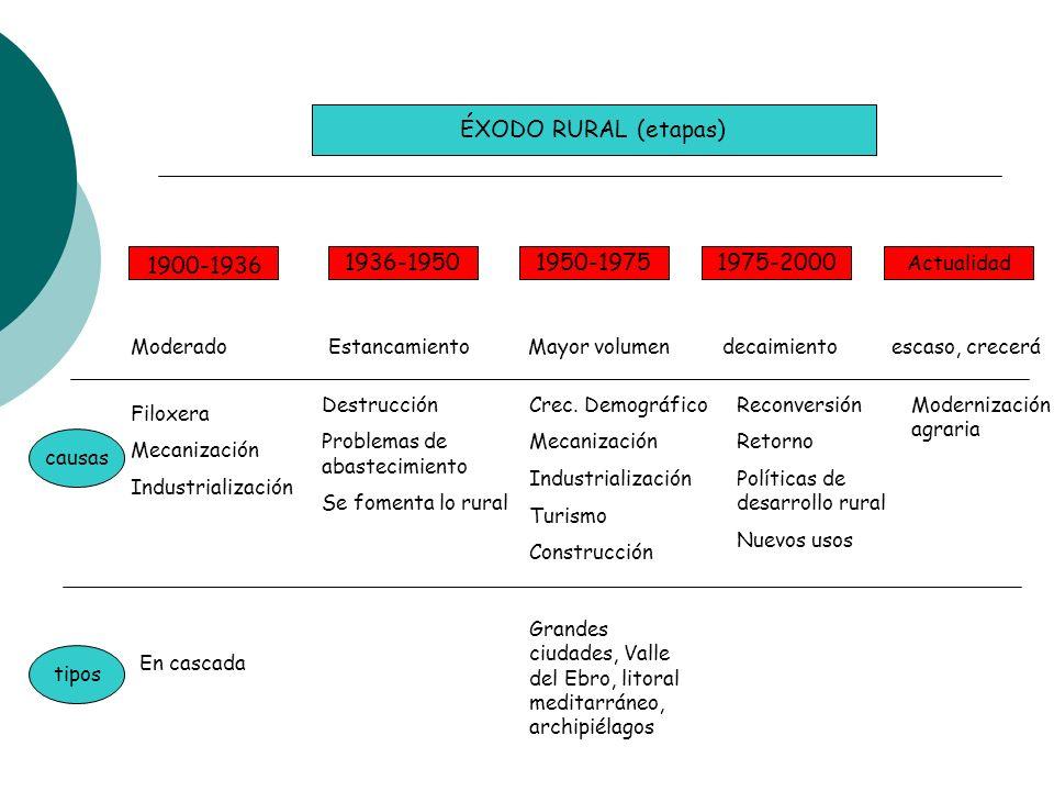 ÉXODO RURAL (etapas) 1936-19501950-19751975-2000 1900-1936 Actualidad Moderado Estancamiento Mayor volumen decaimiento escaso, crecerá causas tipos Fi