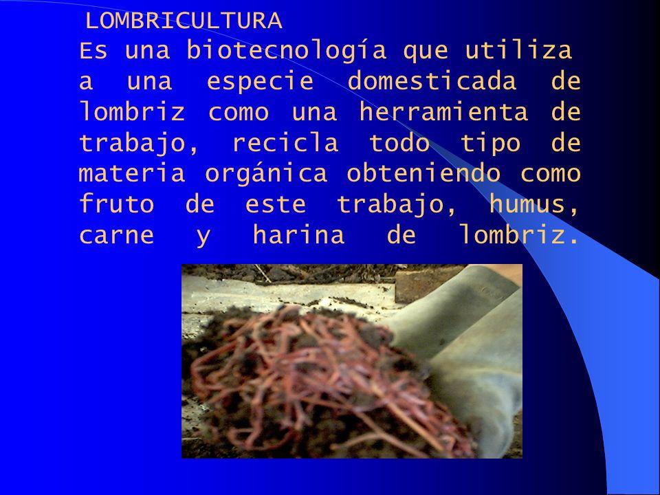 LOMBRICULTURA Es una biotecnología que utiliza a una especie domesticada de lombriz como una herramienta de trabajo, recicla todo tipo de materia orgá