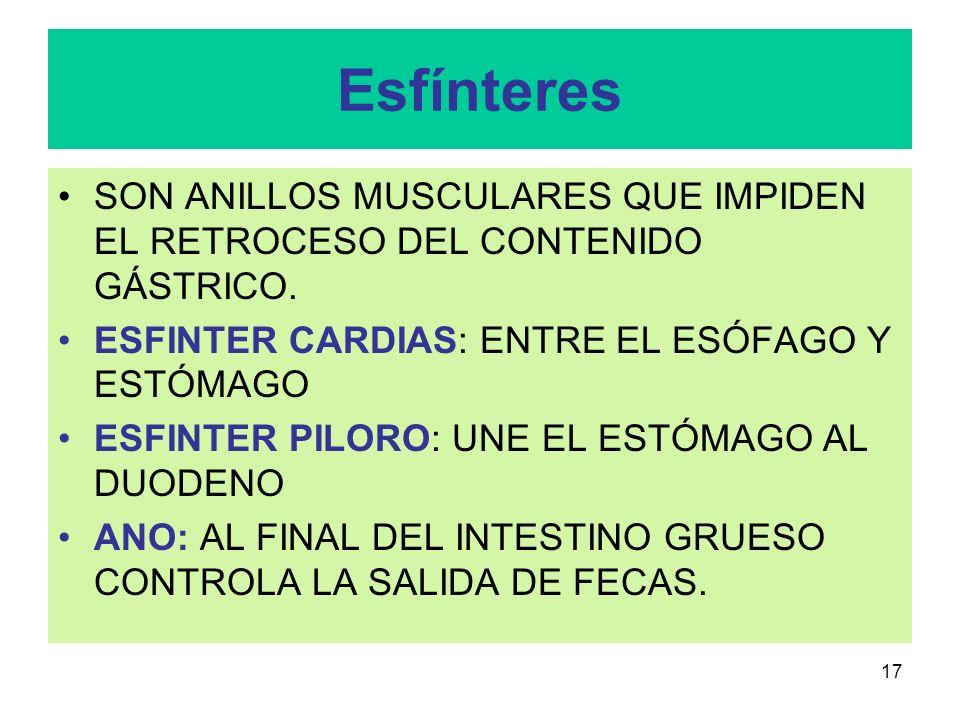 16 FARINGE CONDUCTO MIXTO: PARA LA FUNCIÓN DIGESTIVA PERMITE EL PASO DEL BOLO AL ESÓFAGO.