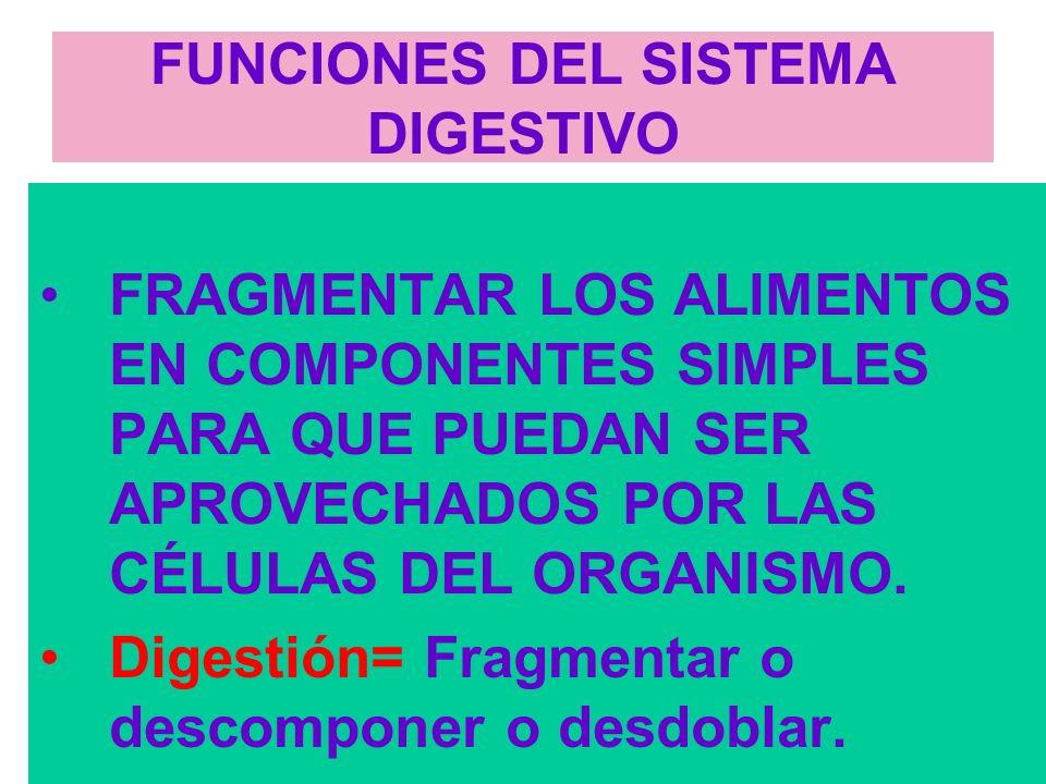2 FUNCIONES DEL SISTEMA DIGESTIVO FRAGMENTAR LOS ALIMENTOS EN COMPONENTES SIMPLES PARA QUE PUEDAN SER APROVECHADOS POR LAS CÉLULAS DEL ORGANISMO.