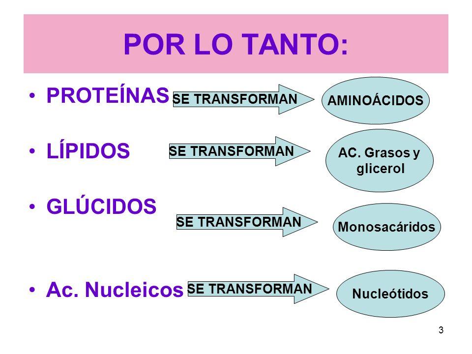 43 Los ácidos biliares disuelven las grasas en el contenido acuoso del intestino, como los detergentes disuelven la grasa de una sartén.