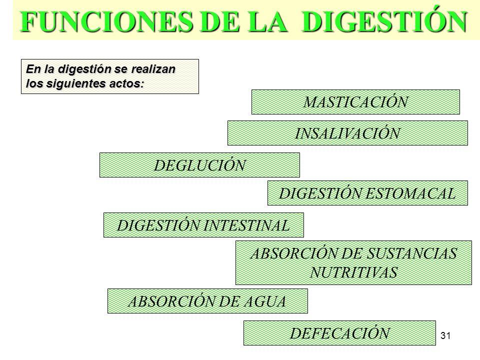 30 Deglución Digestión Estomacal Asimilación Asimilación Masticación.
