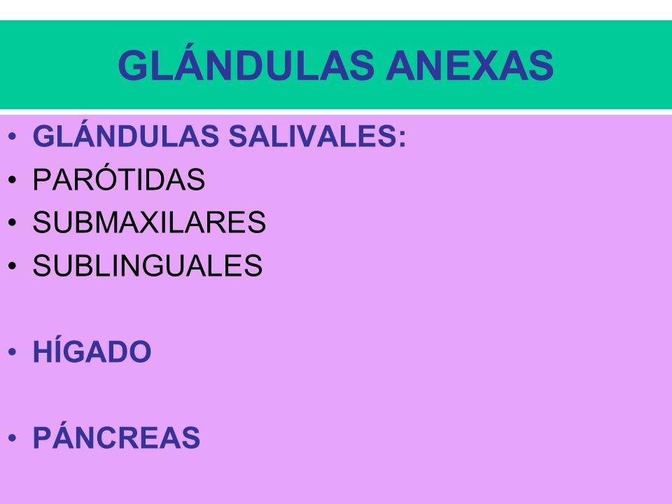 32 JUGO INTESTINAL TERMINA EL ATAQUE DE LOS GLÚCIDOS, GRASAS Y PROTEÍNAS.