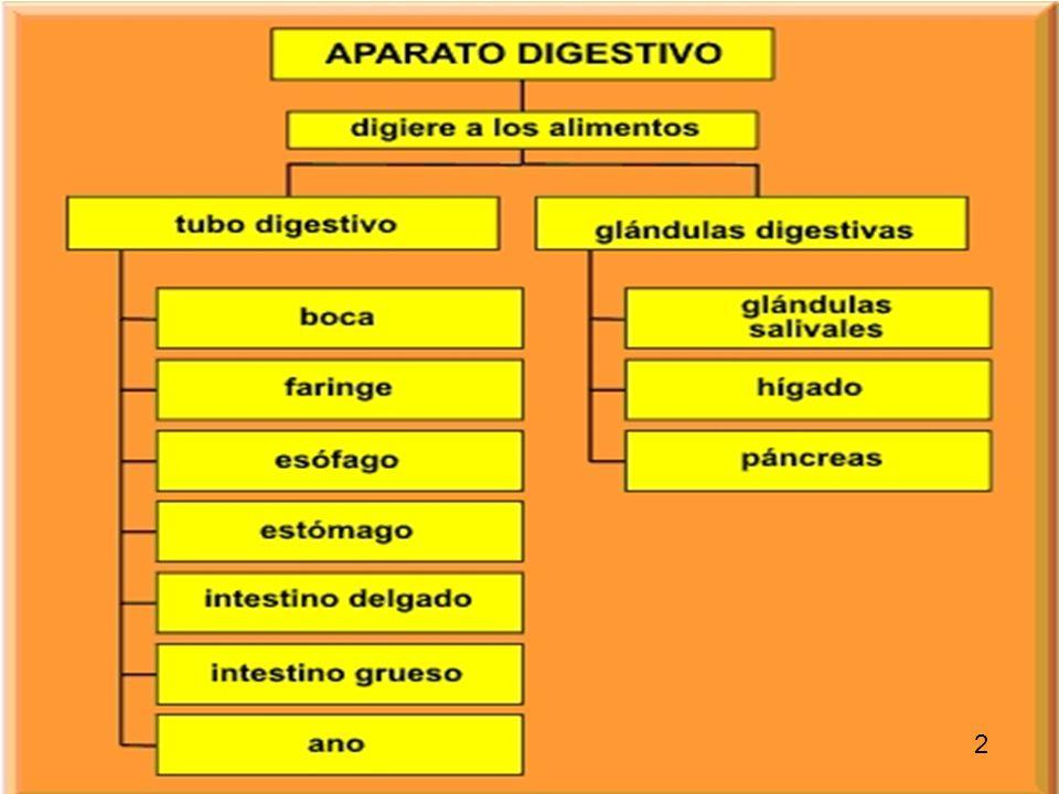 4 Aparato Digestivo Boca Fosa nasal El aparato digestivo es un largo tubo, con importantes glándulas asociadas, siendo su función la transformación de las complejas moléculas de los alimentos en sustancias simples y fácilmente utilizables por el organismo.