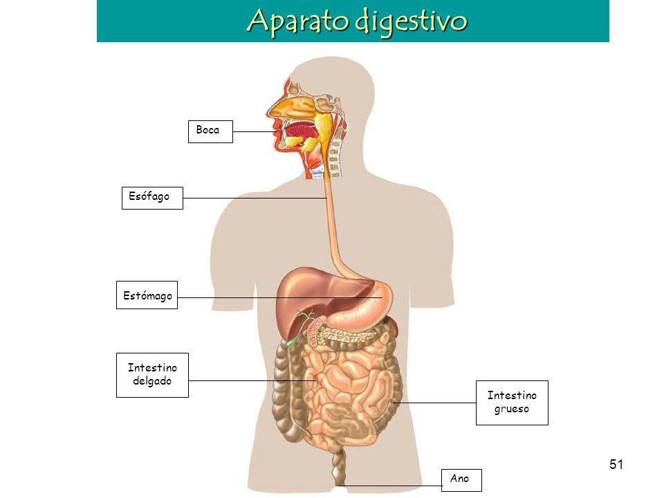 50 La alimentación La dieta es el conjunto de alimentos que toma habitualmente una persona.
