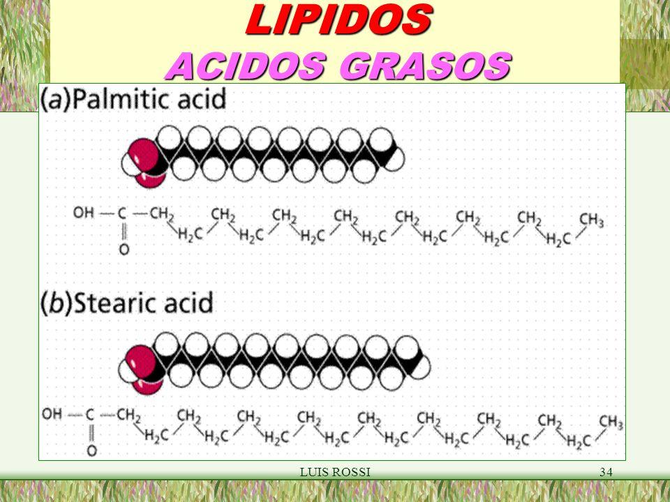 LUIS ROSSI34 LIPIDOS ACIDOS GRASOS