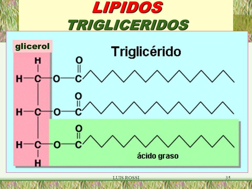 LUIS ROSSI35 LIPIDOS TRIGLICERIDOS glicerol