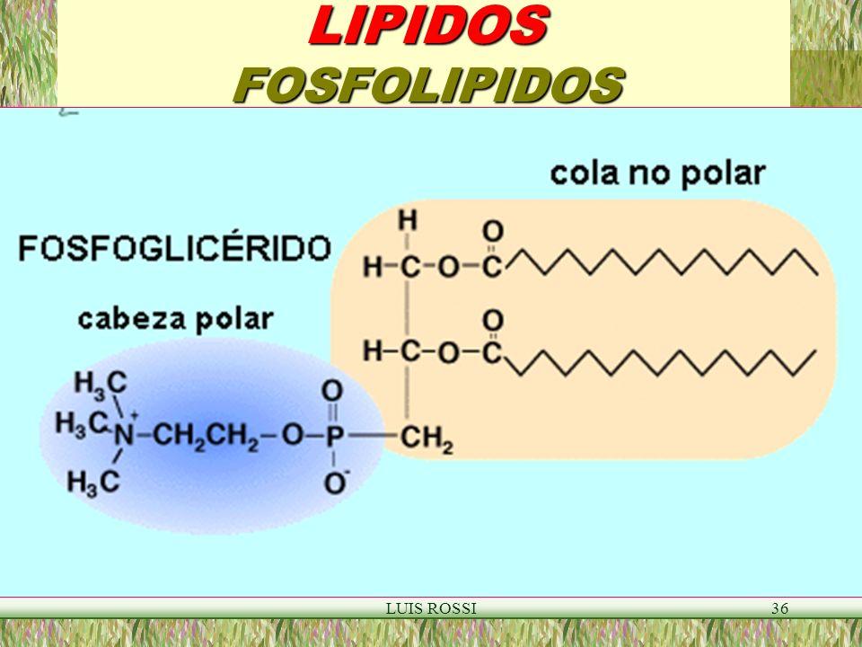 LUIS ROSSI36 LIPIDOS FOSFOLIPIDOS