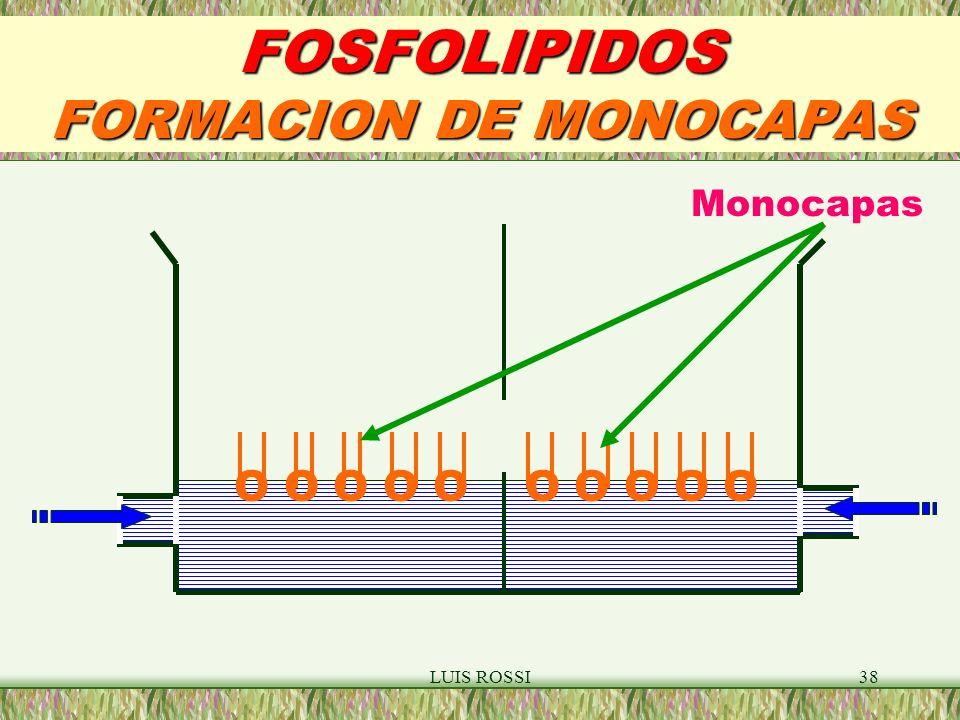 LUIS ROSSI38 FOSFOLIPIDOS FORMACION DE MONOCAPAS O O O O O Monocapas