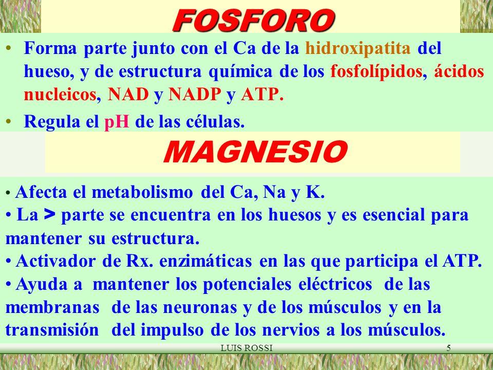 LUIS ROSSI5FOSFORO Forma parte junto con el Ca de la hidroxipatita del hueso, y de estructura química de los fosfolípidos, ácidos nucleicos, NAD y NADP y ATP.