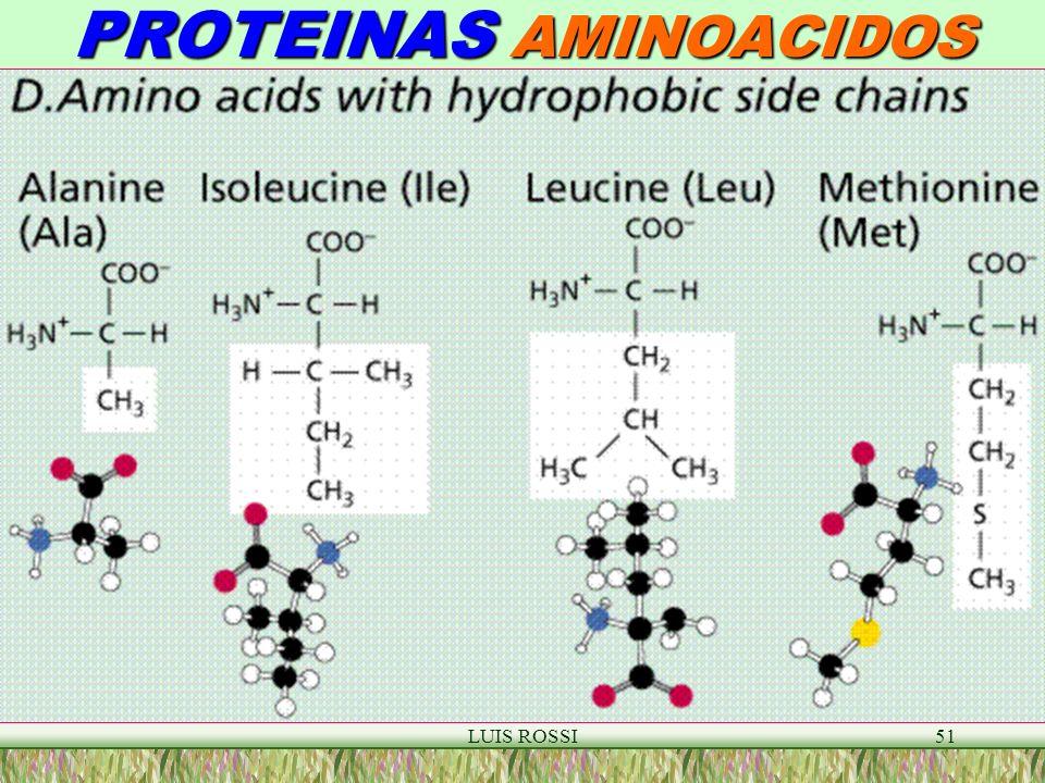 LUIS ROSSI51 PROTEINAS AMINOACIDOS