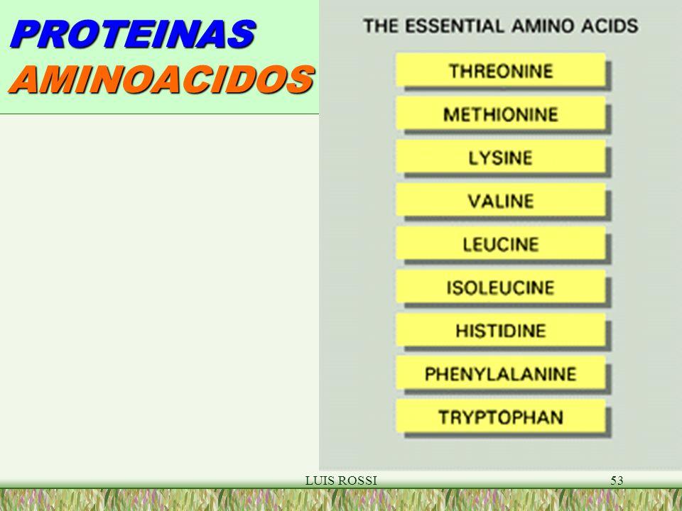 LUIS ROSSI53 PROTEINAS AMINOACIDOS