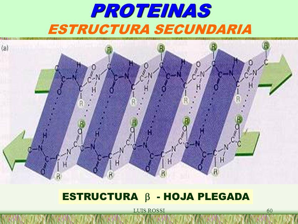 LUIS ROSSI60 PROTEINAS PROTEINAS ESTRUCTURA SECUNDARIA ESTRUCTURA - HOJA PLEGADA