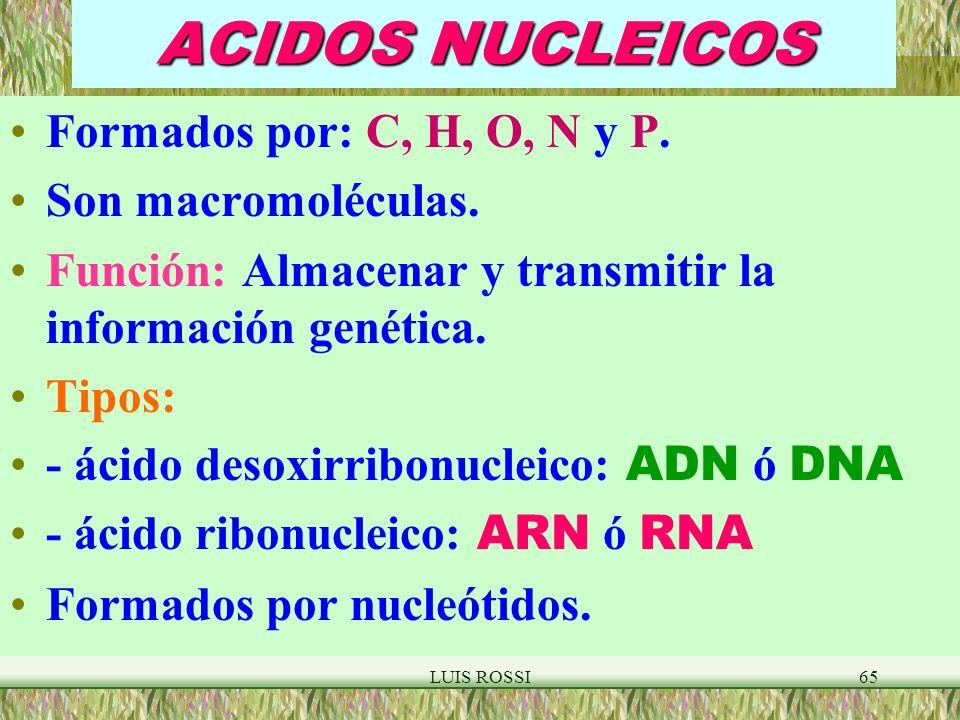 LUIS ROSSI65 ACIDOS NUCLEICOS Formados por: C, H, O, N y P.