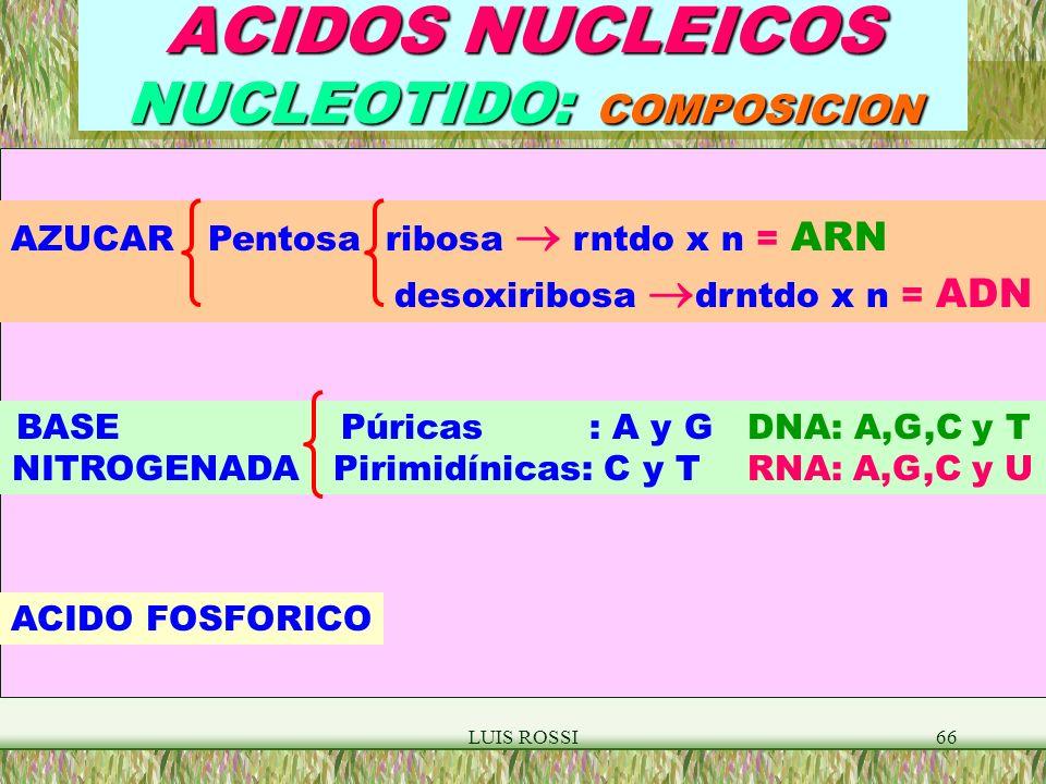 LUIS ROSSI66 ACIDOS NUCLEICOS NUCLEOTIDO: COMPOSICION AZUCAR Pentosa ribosa rntdo x n = ARN desoxiribosa drntdo x n = ADN BASE Púricas : A y G DNA: A,G,C y T NITROGENADA Pirimidínicas: C y T RNA: A,G,C y U ACIDO FOSFORICO