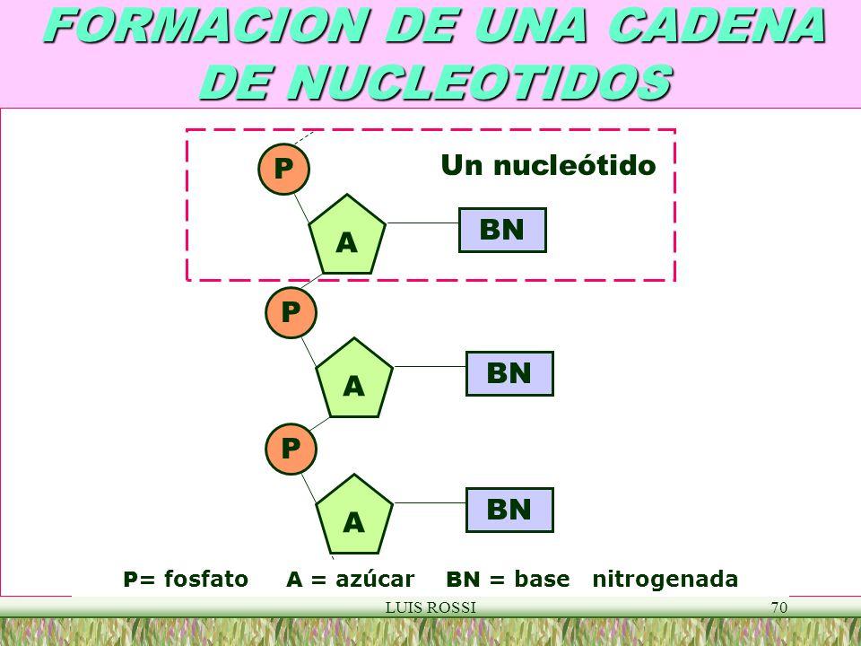LUIS ROSSI70 FORMACION DE UNA CADENA DE NUCLEOTIDOS A A A P P P BN Un nucleótido P = fosfato A = azúcar BN = base nitrogenada
