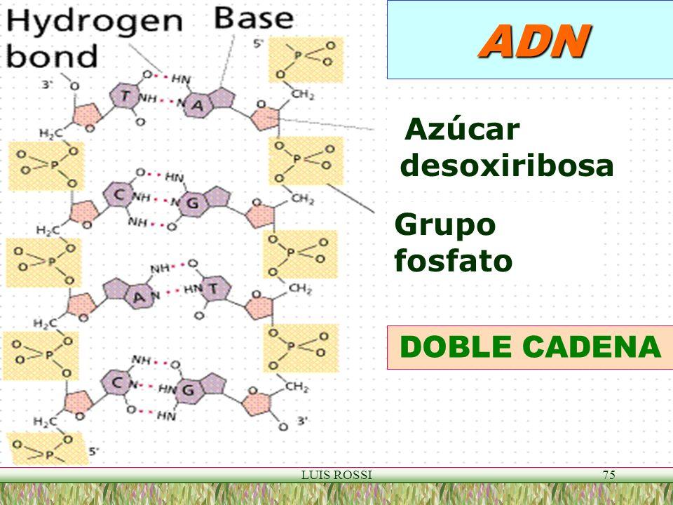 LUIS ROSSI75 ADN DOBLE CADENA Azúcar desoxiribosa Grupo fosfato