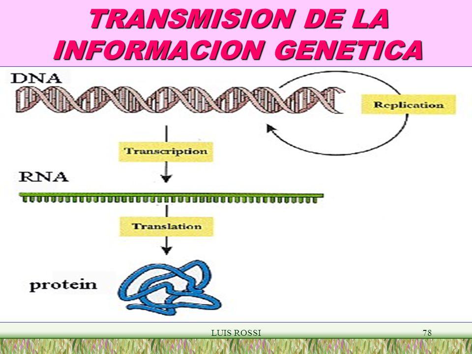 LUIS ROSSI78 TRANSMISION DE LA INFORMACION GENETICA