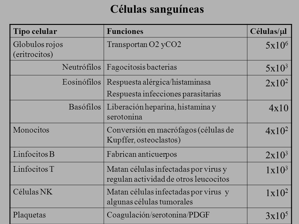 Neutrófilo Eosinófilo Basófilo Monocito