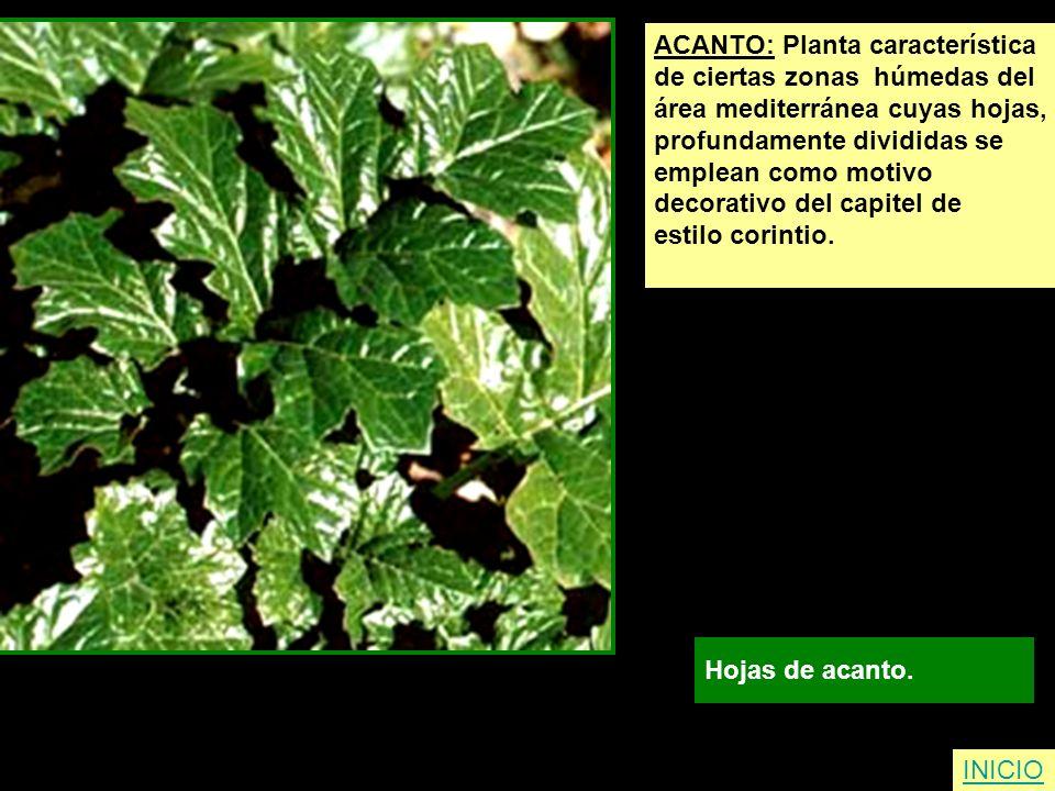ACANTO: Planta característica de ciertas zonas húmedas del área mediterránea cuyas hojas, profundamente divididas se emplean como motivo decorativo de