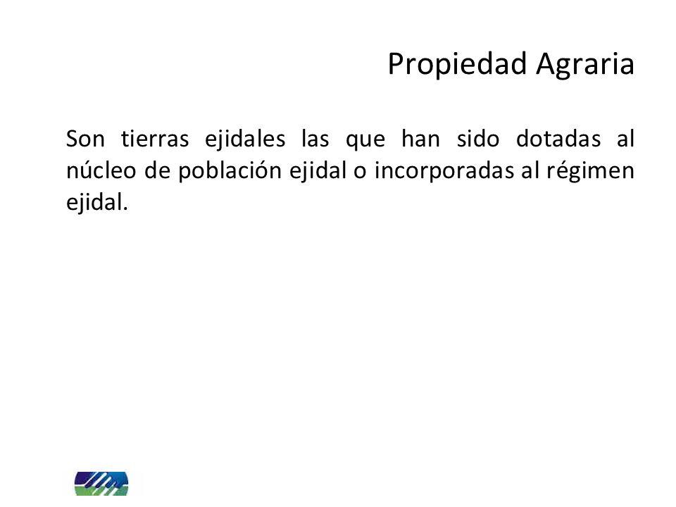 Son tierras ejidales las que han sido dotadas al núcleo de población ejidal o incorporadas al régimen ejidal. Propiedad Agraria