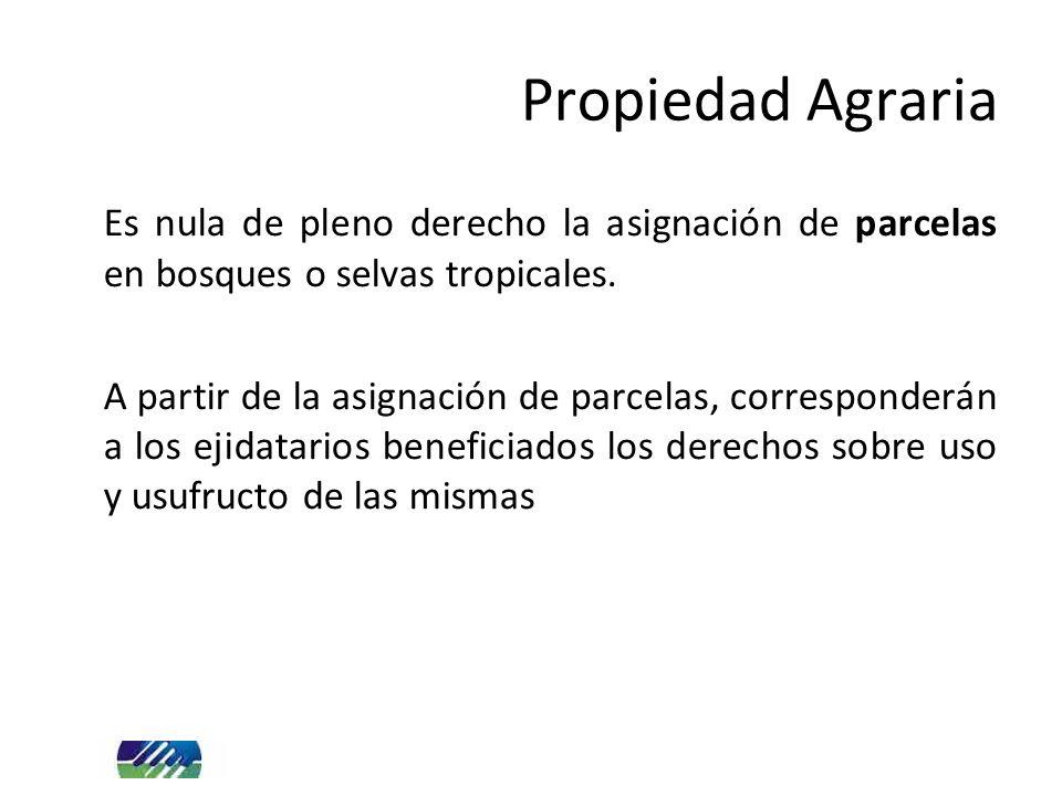 Es nula de pleno derecho la asignación de parcelas en bosques o selvas tropicales. A partir de la asignación de parcelas, corresponderán a los ejidata