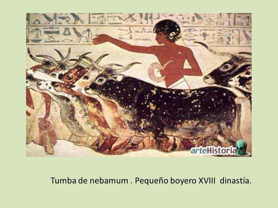Tumba de nebamum. Pequeño boyero XVIII dinastía.