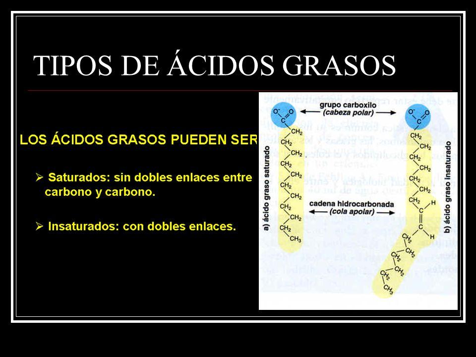 TIPOS DE ÁCIDOS GRASOS