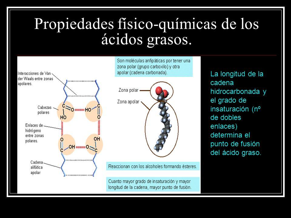 Propiedades físico-químicas de los ácidos grasos. La longitud de la cadena hidrocarbonada y el grado de insaturación (nº de dobles enlaces) determina