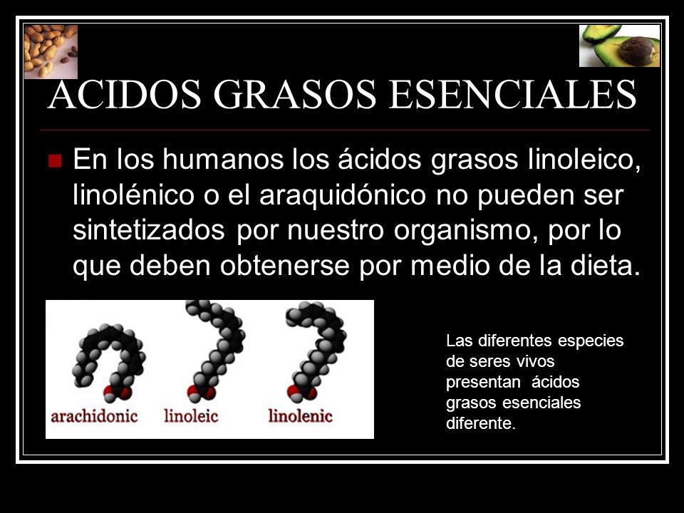 ACIDOS GRASOS ESENCIALES En los humanos los ácidos grasos linoleico, linolénico o el araquidónico no pueden ser sintetizados por nuestro organismo, po