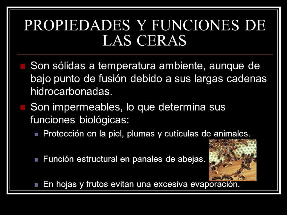 PROPIEDADES Y FUNCIONES DE LAS CERAS Son sólidas a temperatura ambiente, aunque de bajo punto de fusión debido a sus largas cadenas hidrocarbonadas. S