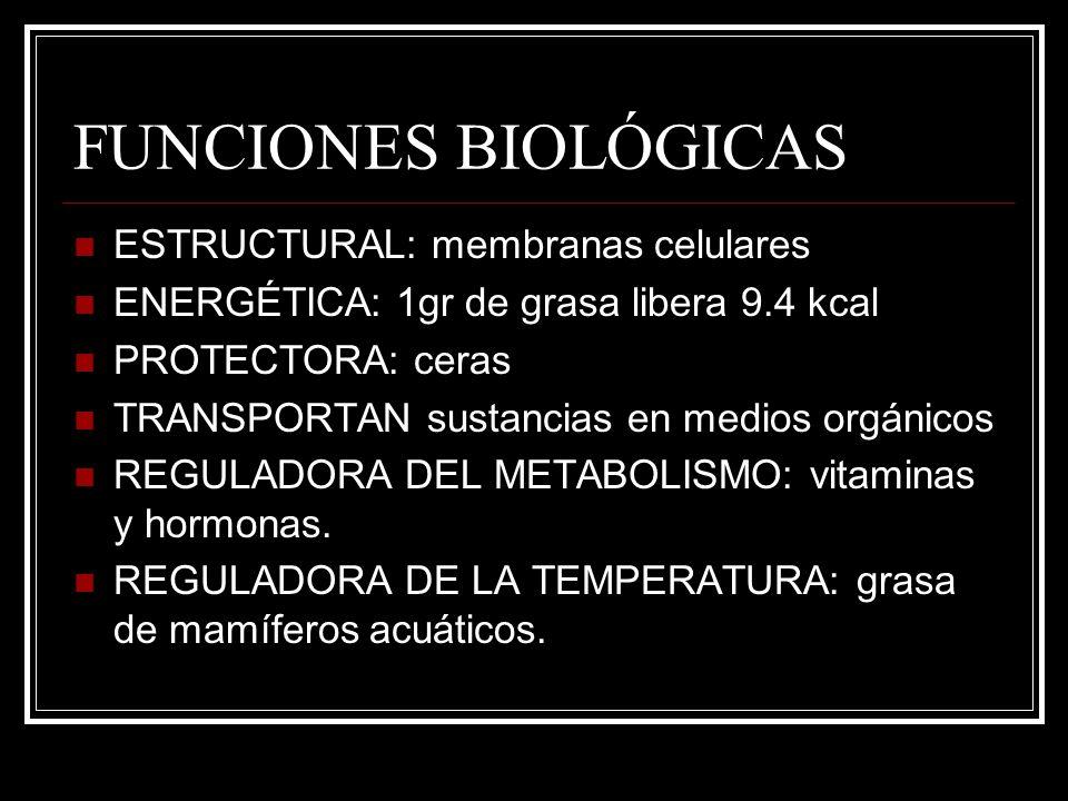FUNCIONES BIOLÓGICAS ESTRUCTURAL: membranas celulares ENERGÉTICA: 1gr de grasa libera 9.4 kcal PROTECTORA: ceras TRANSPORTAN sustancias en medios orgá